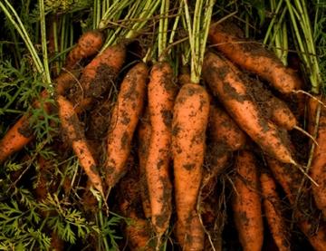 Carrots_Lores_web
